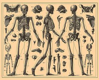 Skeletal System | by evillalba