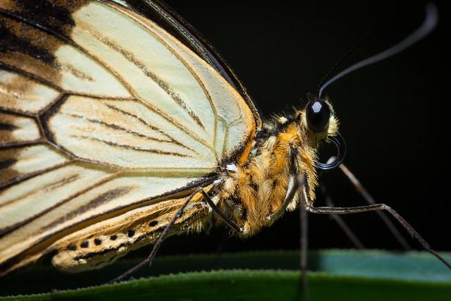 Butterfly Palace 7994