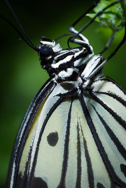 Butterfly Palace 8145