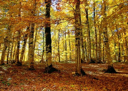 alberi canon natura autunno paesaggio abruzzo simbruini marsica maglianodemarsi lucianodionisi