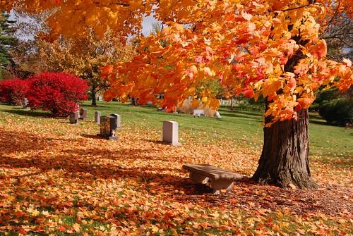 autumn fall nature colors cemetery leaves oakhill cincinnati oh mygearandme rememberthatmomentlevel1 rememberthatmomentlevel2 jennypansing