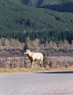 Canada   -   Banff National Park, Alberta   -  May 1976