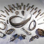 Viking silver hoard from Bedale area, North Yorkshire