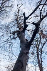Dead Tree, Graz 2018