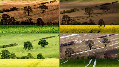 collage montage whiston guilthwaite guilthwaitecommonlane rotherham southyorkshire farmland agriculture seasons fourseasons ayearinthelife lightandshadow