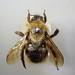 Bombus campestris 'swynnertoni' (Swynnerton's Cuckoo Bee)