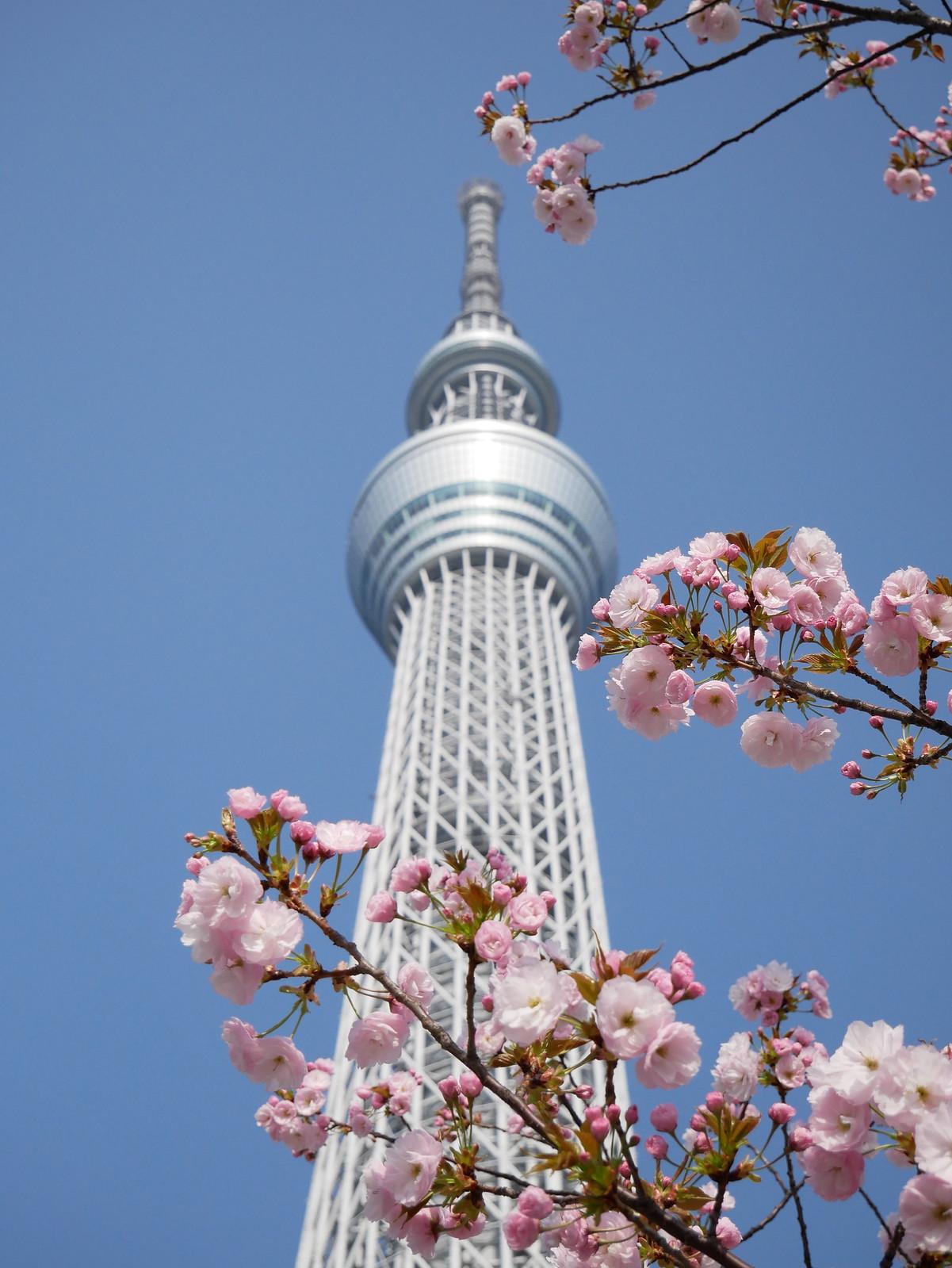 2018東京櫻花行 Day4 – 晴空塔有晴空