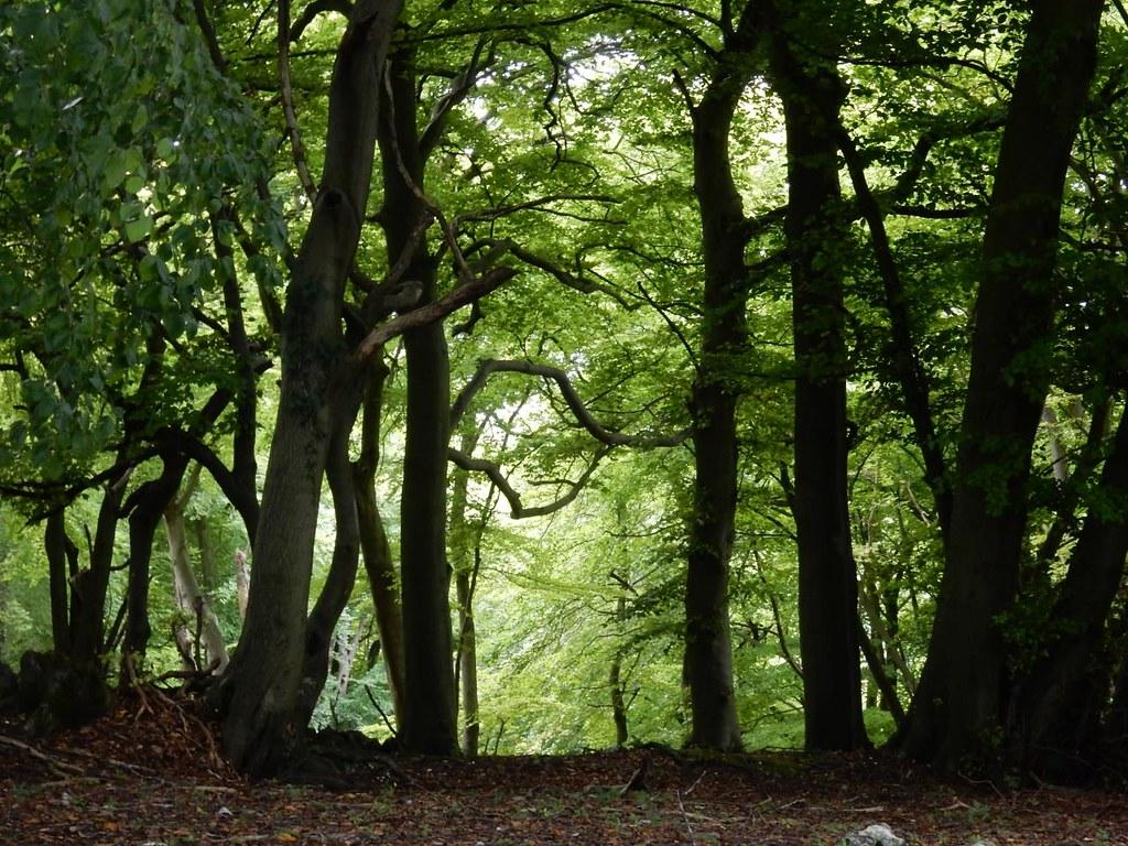 Light through trees Henley Circular via Stonor