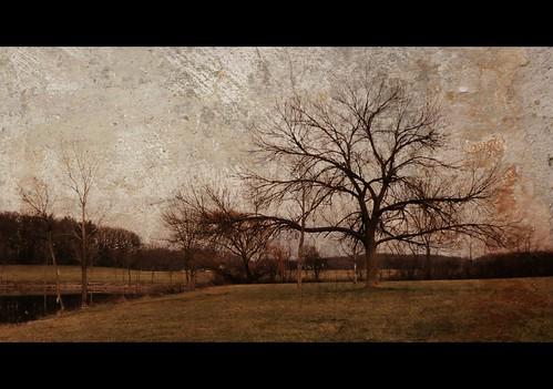 tree 2012 illinois turtle head lake edited palos heights fall weather