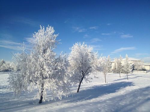 trees winter sky snow ice field mobile clouds frost day iphone davidsmith calgaryalbertacanada