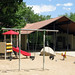 Martin Park Shelter