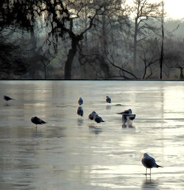 barefoot ice walkers