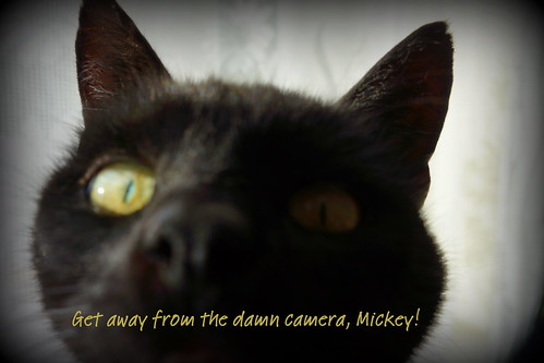 Mickey the Cat too close