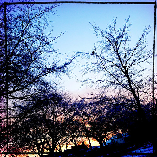 morning blue trees winter sky orange bird silhouette sunrise branches crow iphoneography hipstamatic wattslens rtvfilm