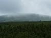 Úpské rašeliniště, foto: Petr Nejedlý