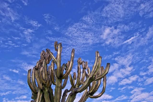 Cactus Clouds
