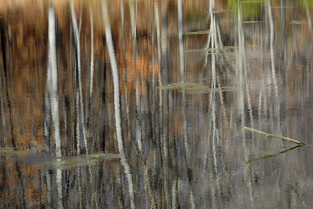 rosaryville pond reflections- abstract