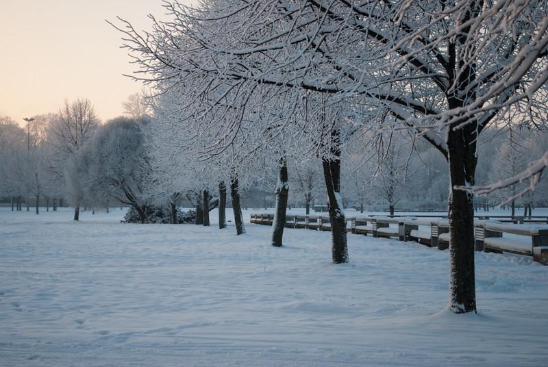 Winter wonderland!  В СНЕГУ. 15:06:58 DSC_3946