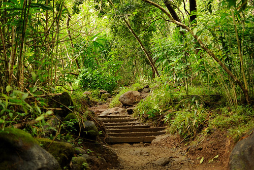 Manoa Falls Trail | by jdnx