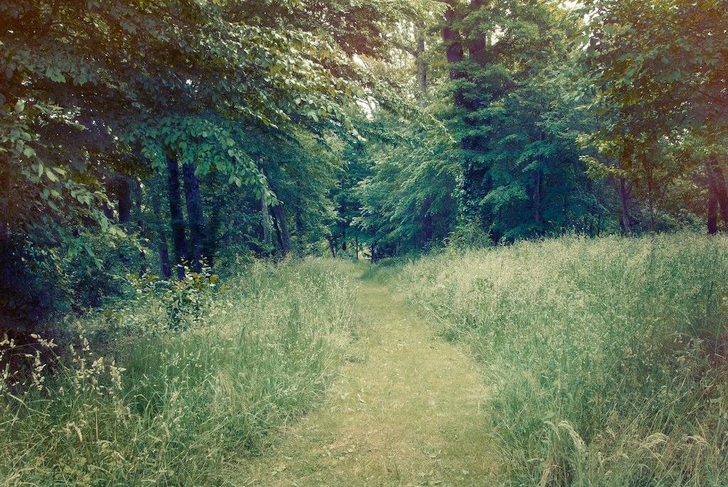 Woodland france trees 2