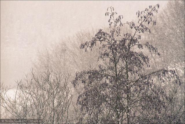 Bäume im Schneetreiben