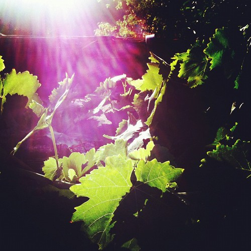 morning sunrise jj grapevine sunflare instamood uploaded:by=flickstagram instagram:photo=24258919239721830823031