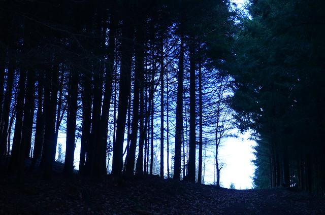 « La forêt est un état d'âme. »  -