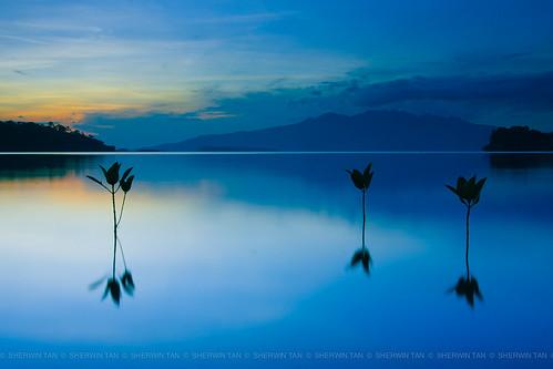 ocean longexposure sunset sea yellow landscape bay philippines mangrove subic seedlings morong centralluzon