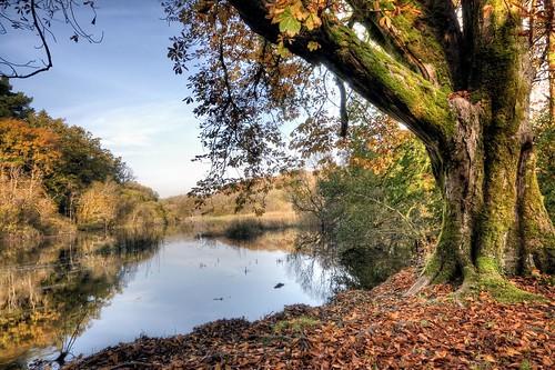 autumn ireland lake tree fall leaves river nikon cong d90 todaniell odaniell tomodaniellcom