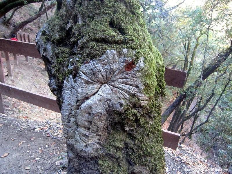 San Jose_Alum Rock Park (32)