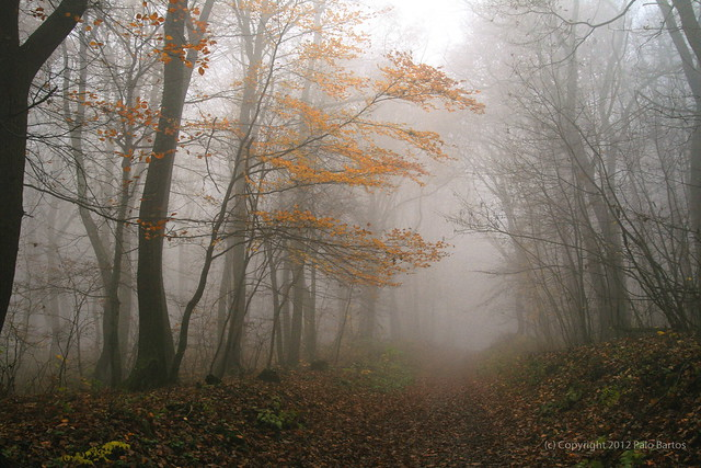 Misty November Forest