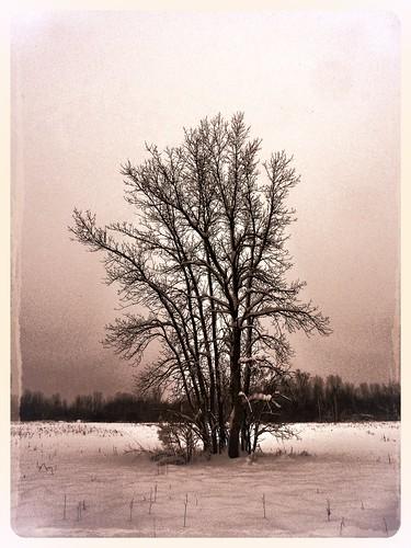 winter sky snow tree field dark landscape december me2youphotographylevel1 me2yoyphotographylevel1