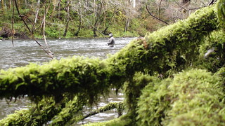 Fishing the Sol Duc | by Maine River Guides