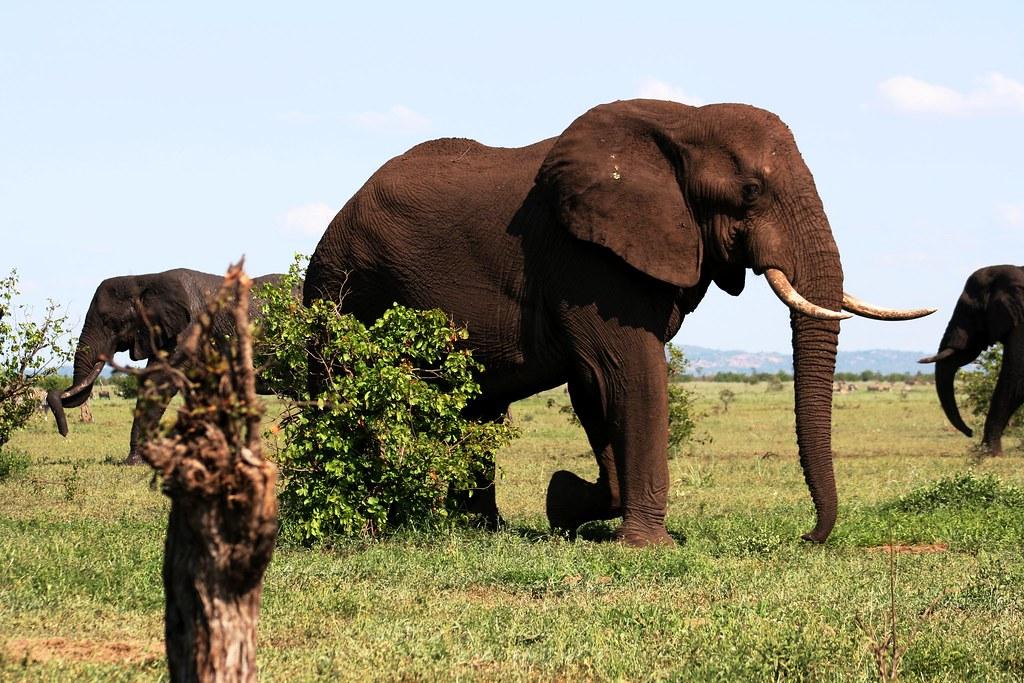Kruger National Park, South Africa | Kruger National Park, S… | Flickr