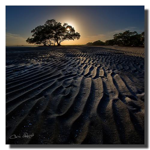 trees sunrise australia brisbane queensland ripples hdr nudgeebeach abigfave graduatedndfilter 1740f40l hitechfilters oloneophotoengine canon5dmklll