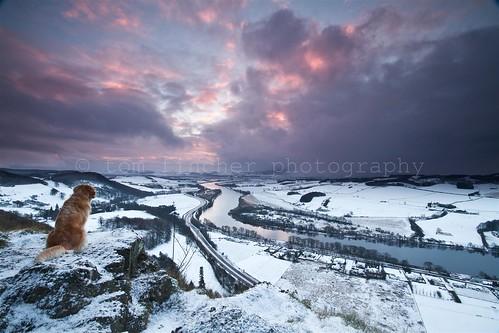 dog snow sunrise river shower view hill perthshire tay perth kinnoull valeey morningmdawn