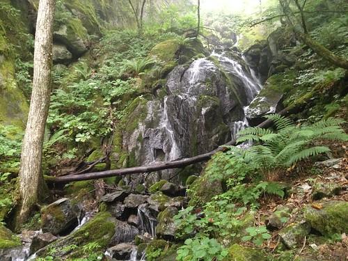鳳凰山 ドンドコ沢 滝   by ichitakabridge