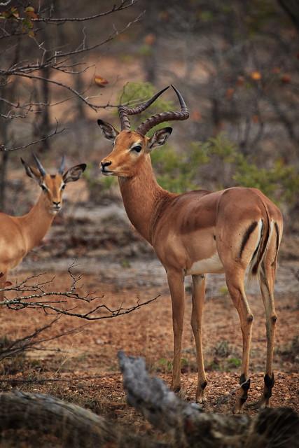 Next: Bambi's Boyfriend