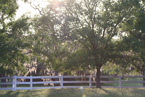 trees light usa sun white backlight rural glow texas afternoon country woodenfence spanishmoss oaktrees sunspots montgomerycounty reflectivelight pinehursttx exploredjan4th294