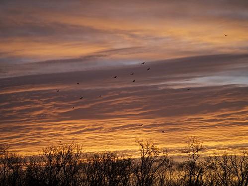 bird landscape texas wildlife cbc g3 mikaelbehrens