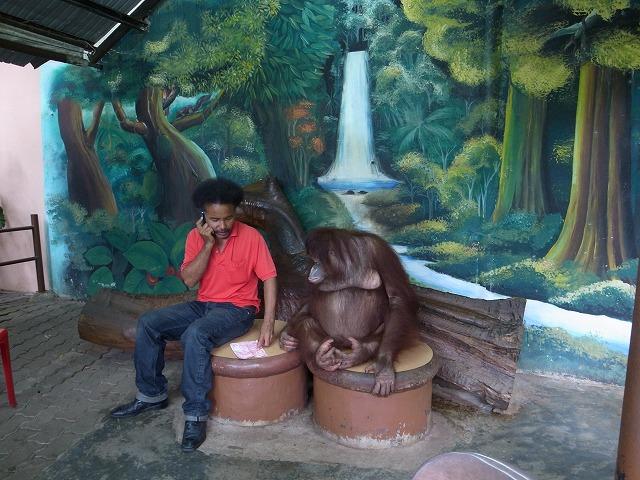<p>プーケット動物園のオラウータン</p>