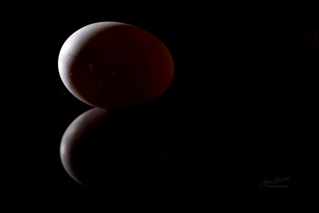 [Explored] Ovum - Project Flickr 2013: 02/52 - Back Light