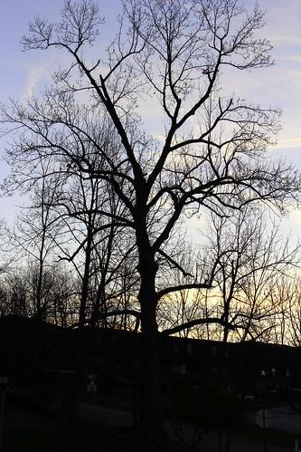 trees sunrise wv wheeing northwheeling