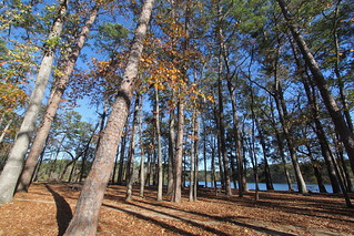 Piney Woods, Huntsville State Park TX | by roy.luck