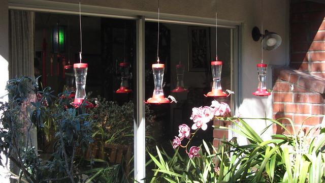 IMG_4503 Gilberts hummingbird feeders Goleta Coronado