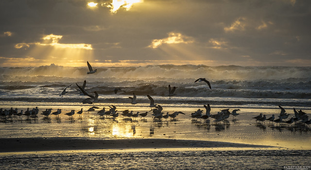 i had to fly to catch you | san gregorio, california