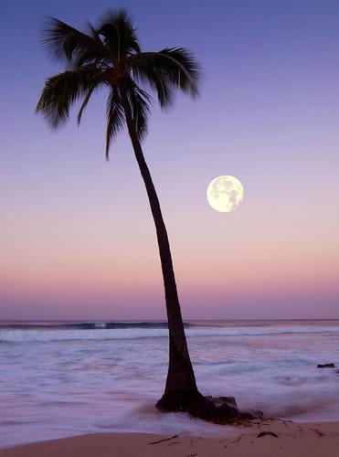 sunset vacation moon seascape tree beach beautiful sunrise landscape photography hawaii photo amazing sand waves photographer image shoreline picture palmtree tropical coastline bigisland kailuakona fromhereonin christopherjohnson honls silhouettemoonset