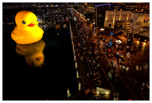 Rubber Duck in Darling Harbour, Sydney | by Alfred Hernandez