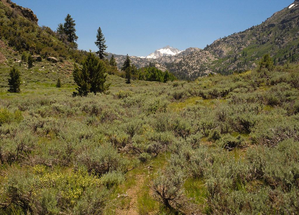 Hiking trail through Leavitt Meadows heading towards Roose