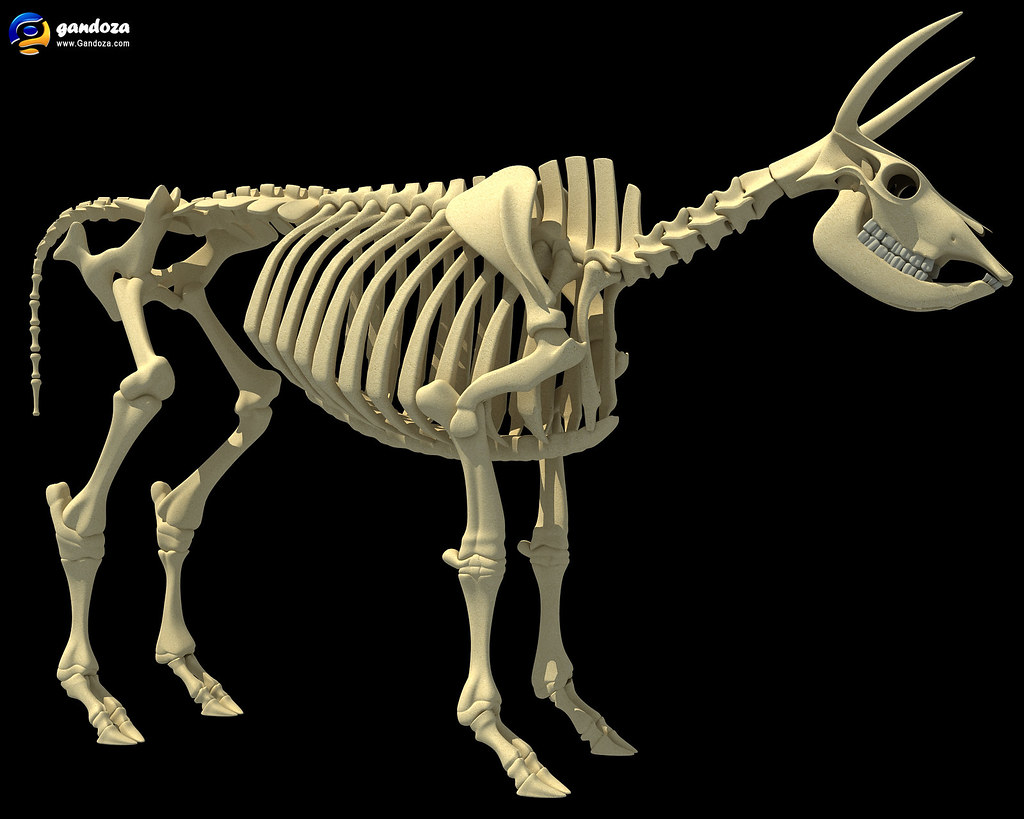 Cow Skeleton - 3D Model | Detailed 3d model of cow skeleton | Flickr